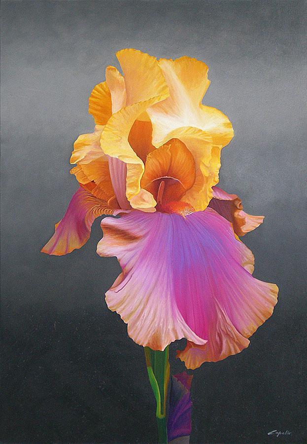 Iris by Francesco Capello
