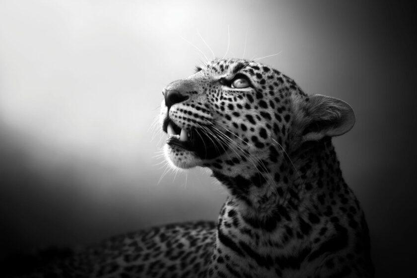 Soul Of Leopard by Björn Persson